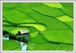 Xây dựng nông thôn mới - khảo sát và đánh giá
