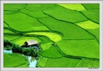 Đẩy mạnh tuyên truyền trên báo đảng về nông nghiệp , nông dân , nông thôn đồng bằng sông cửu long